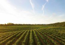 Italia modello agricolo